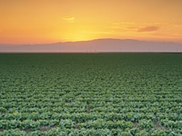 san joaquin valley - Google Search