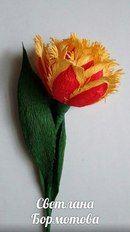 Тюльпан бахромчато-игольчатый мас..