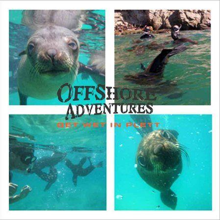 Offshore Adventures, Plettenberg Bay