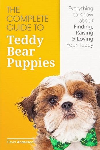 7 Things to Know Before Buying a Teddy Bear Puppy