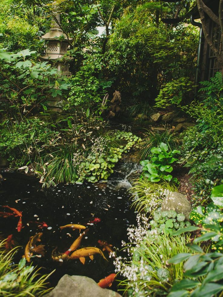 73 Pond Images Let You Dream Of A Beautiful Garden: 1000+ Images About Pond, Streams & Waterfall Ideas On
