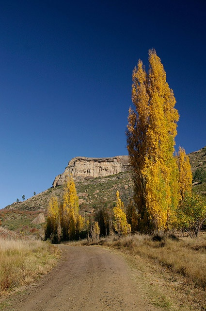 Eastern Free State 2012 by Liesel Wessels.  Autumn Trees