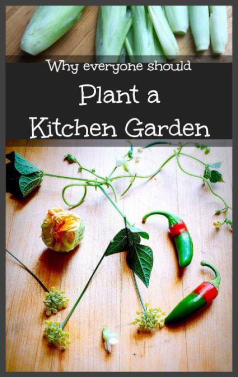 Here are the top reasons that everyone should start their own backyard garden…