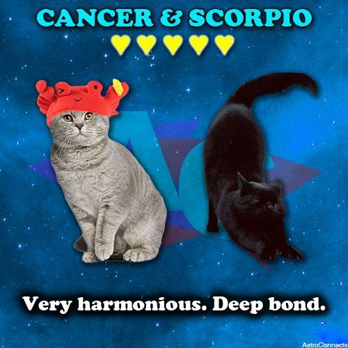 Cancer dating scorpio