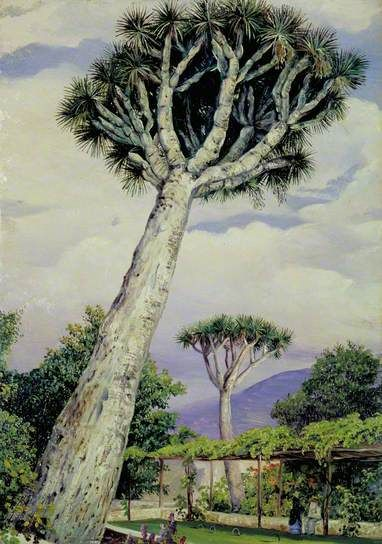 Dragon Tree in the Garden of Mr Smith, Teneriffe by Marianne North  1875