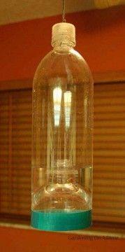 DIY Water Bottle Wasp Trap