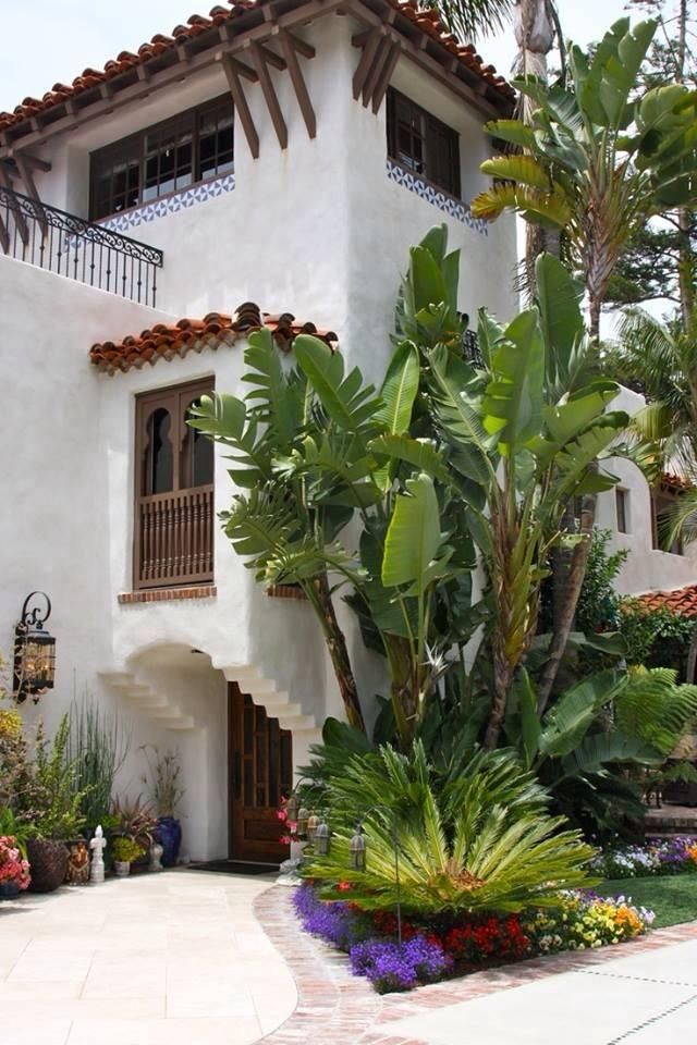 The 25 Best Sago Palm Ideas On Pinterest Sago Palm Tree Sago Palm Care And Ornamental Plants