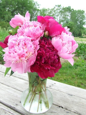 Peonies.  My mother gave me a beautiful vase of them every year for my birthday from her garden!  <3