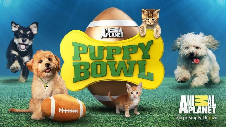 Puppy Bowl 2017 is confirmed! Make sure to watch these little furry guys battle it out on the field on Animal Planet February 5, 2017. -