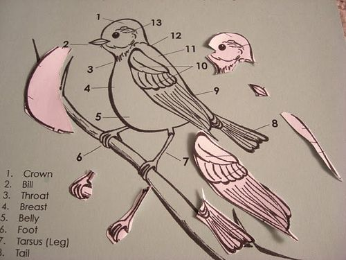 Montessori bird unit - parts of a bird. Coloured sheet to highlight