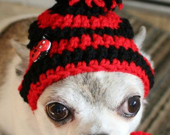 Small Dog hat free shipping