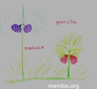 Dibujo de materias primas hecho por artesanas Amorúa.  ( Vichada - Colombia) Conoce más de nuestro trabajo en Mambe.org!