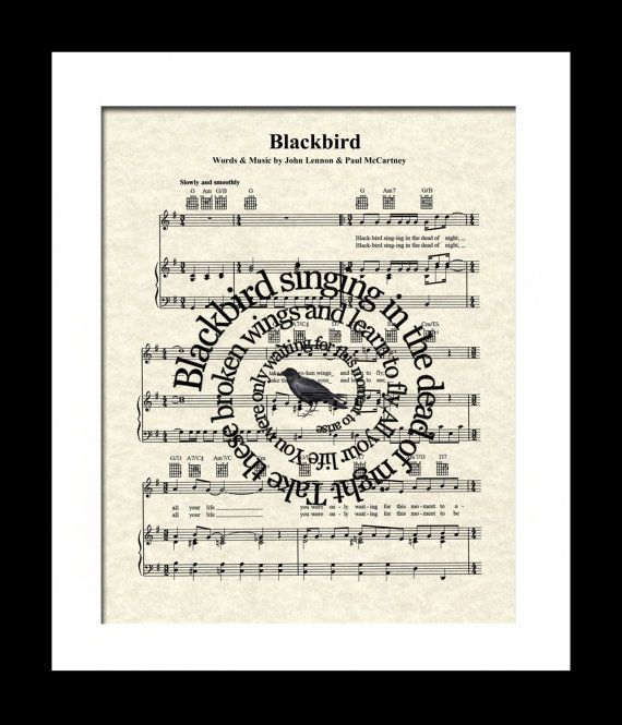 25+ Best Ideas About Blackbird Song On Pinterest