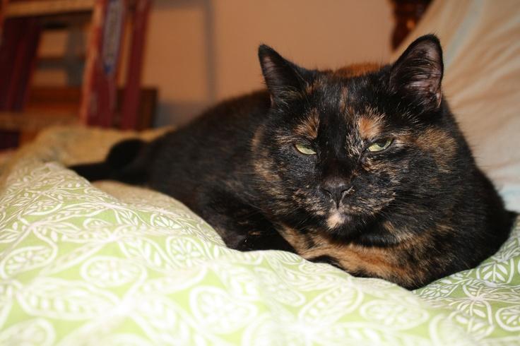 Benson Animals, Cats, Pets