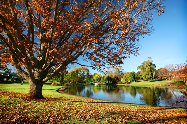 Feed the ducks at Toowoomba's Lake Annand Park while you are in town for the Carnival of Flowers