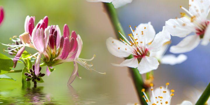 Fiori di Bach: elenco e loro proprietà  Ai primi del Novecento il dottor Edward Bach misa a punto alcuni rimedi derivati da estratti di fiori e piante, i fiori di Bach per l'appunto. Sulla base della convinzione che i problemi fisici fossero il risultato di squilibri emotivi, egli ipotizzò che sciogliendo i blocchi emotivi mediante la somministrazione di rimedi floreali, i disturbi fisici avrebbero registrato un miglioramento. #IAFSTORE #salute #benessere