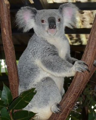 voyage en famille en australie