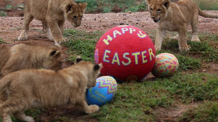 Wishing you a Happy Easter from the lion cub family!