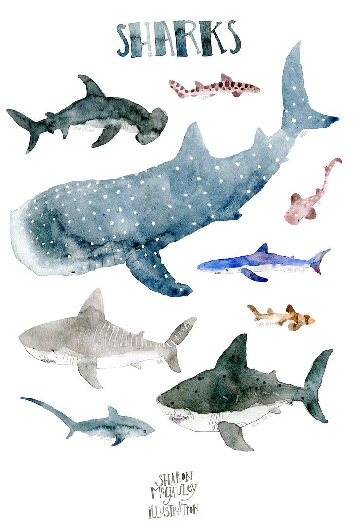 Shark Illustration Original Great White vs Orca Drawing Whale Art Color Pencil Drawing Orca Illustration