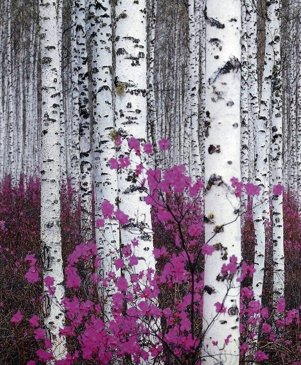 I love this one. Simple but so many little details   Fantastic Birch Forest