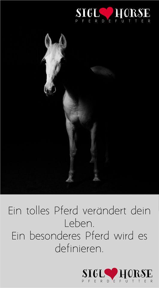 Ein besonderes Pferd wird dein Leben definieren. – Life & Passion