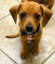 Best Dog Groomer Alexandria Va