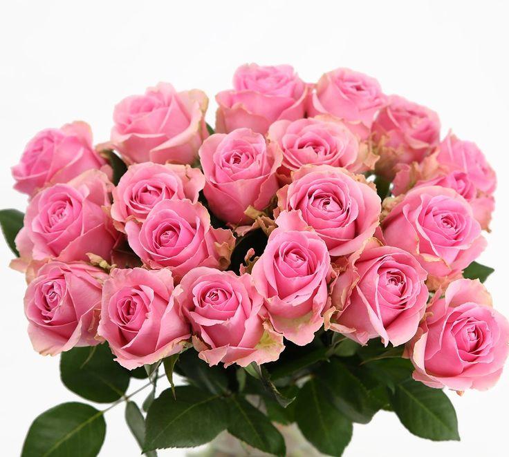 Růže růžová krátká Květiny online - květinářství Praha Pankrác - netradiční kytice, dárky pro muže, dárkové koše, ovocné kytice. Pro ženy čerstvé řezané růže, Holandské tulipány, gerbery. Rozvoz květin.