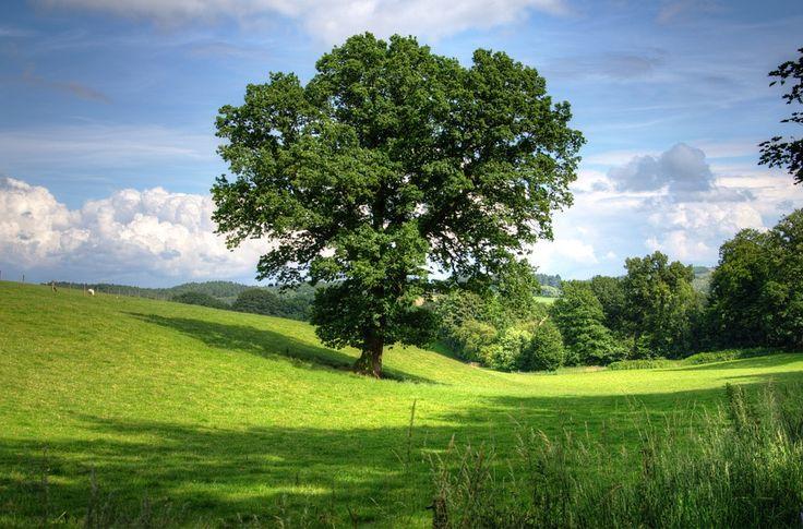 Strom, Dub, Krajina, Pohled, Pole, Scénický, Venkov