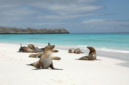 Bahia Gardner, Española Galapagos | Ecuador (by helki)