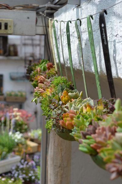 Succulents in soup ladels Dishfunctional Designs: The Upcycled Garden Volume 7: Using Recycled Salvaged Materials In Your Garden ähnliche tolle Projekte und Ideen wie im Bild vorgestellt findest du auch in unserem Magazin . Wir freuen uns auf deinen Besuch. Liebe Grüße