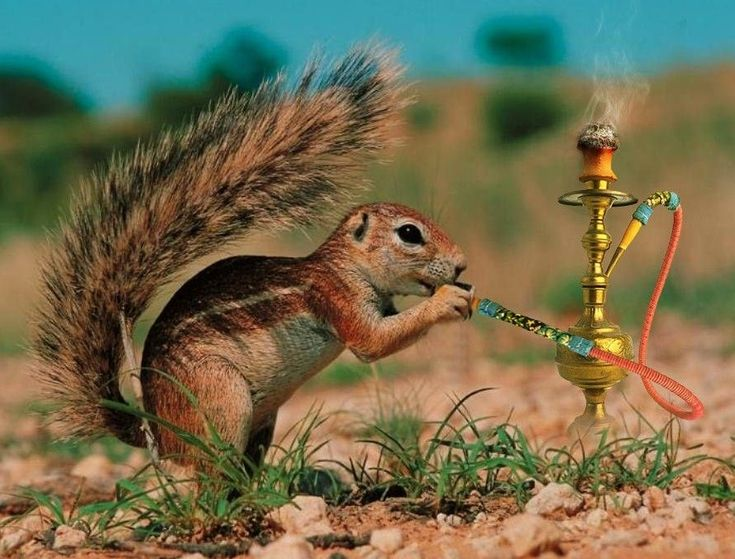 Image result for weed smoking animals