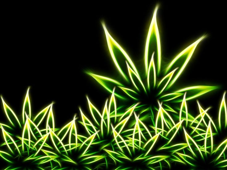 popular weed wallpapers - photo #8