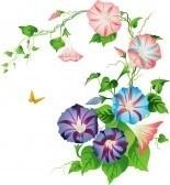 Wildflowers : Volubilis Banque dimages