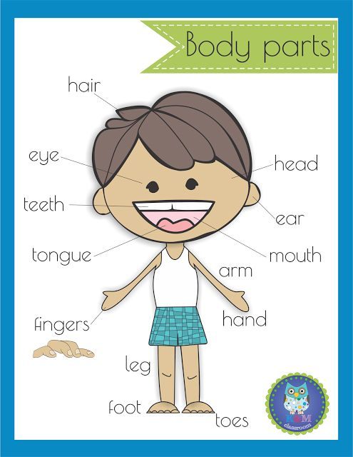 Body Parts Poster Classroom Freebie