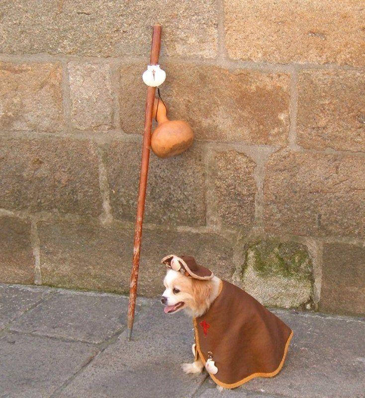 Pilgrim dog in Santiago de Compostela