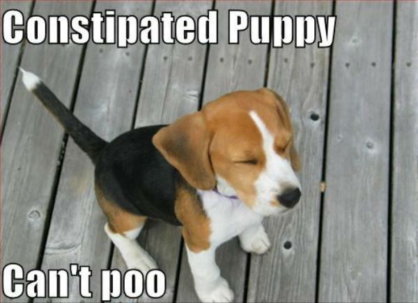 What Can I Give My Little Dog For Constipation