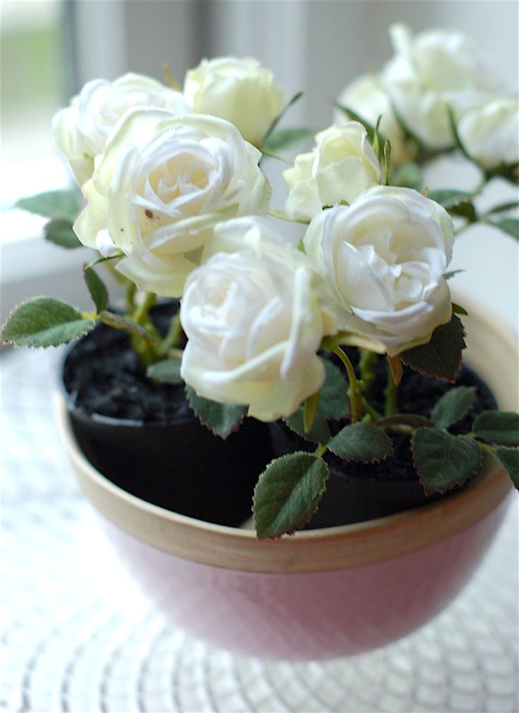 pure white mini roses in pastel pink wooden bowl