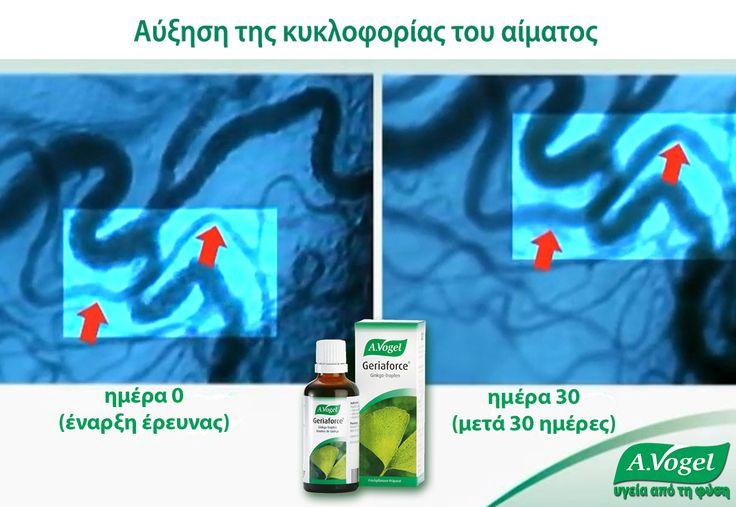 Έρευνα για το εκχύλισμα φύλλων ginkgo biloba της A.Vogel (Geriaforce) έδειξε πόσο αποτελεσματικό είναι το προϊόν Geriaforce της A.Vogel στην αύξηση της αποτελεσματικότητας του κυκλοφορικού συστήματος. Μετά από διάστημα 30 ημερών συνεχούς λήψης εκχυλίσματος Ginkgo Biloba της A.Vogel, παρατηρήθηκε αύξηση της ροής του αίματος στα τριχοειδή αιμοφόρα αγγεία και επανενεργοποίηση ανενεργών τριχοειδών αιμοφόρων αγγείων. Η αύξηση της μικροκυκλοφορίας ήταν εμφανής μετά από 10 μόνο ημέρες.