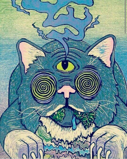 dmt and psychedelic hallucination We treated mature rat cortical cultures for 24 hr with doi, dmt, and lsd as   despite the fact that they are predicted to be hallucinogenic and.