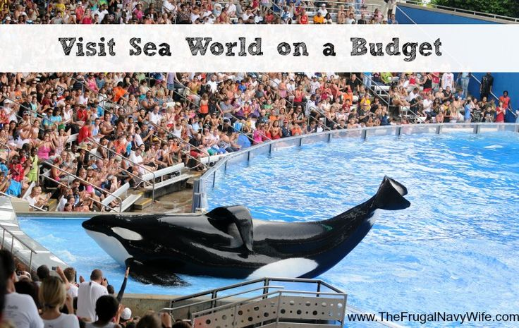 Visit Sea World on a Budget - I remember Sea World as a kid and learned so much from there I can't wait to take my kids!