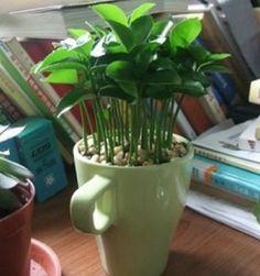 Como plantar limão para perfumar a casa passo a passo