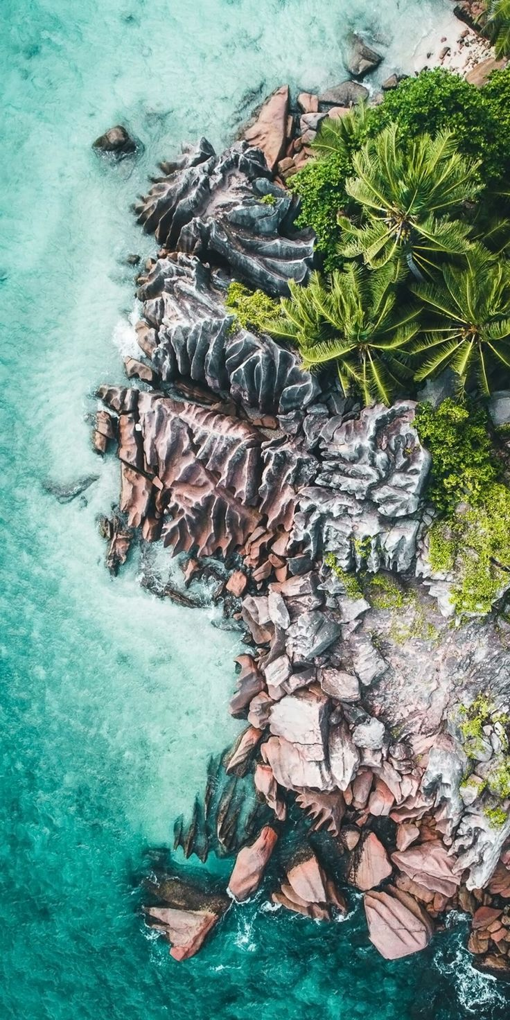Lightroom Presets Aerial Photography Palm Tree Photography Aerial Photography Aerial