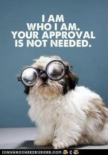 .: Remember This, Self Confidence, Well Said, Shihtzu, Shih Tzu, Dr. Who, Already, Inspiration Quotes, True Stories