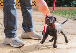 5 essential commands to teach your dog