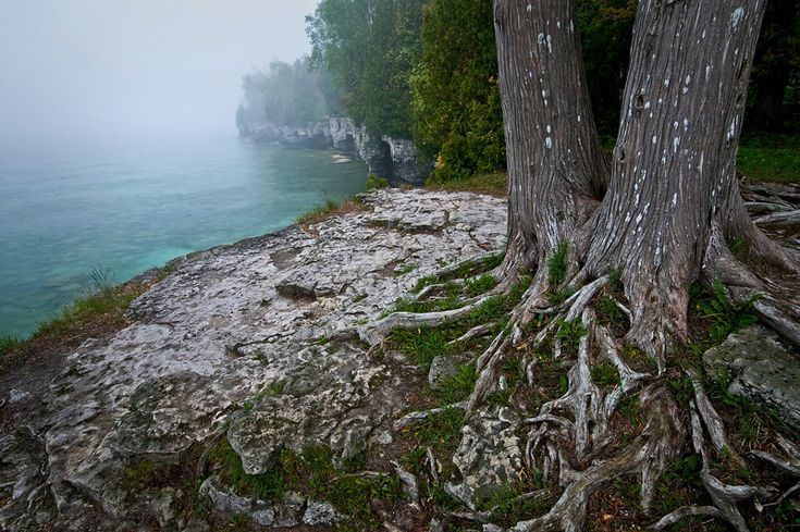 The roots of a cedar tree spread over the rocky shoreline of Cave Point County Park in Door County, Wisconsin.