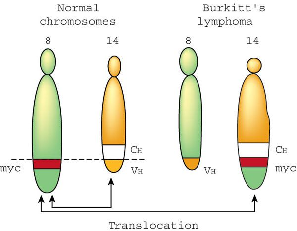 Multiple Defects Impair the HLA Class II Antigen Presentation Capacity of Burkitt Lymphoma
