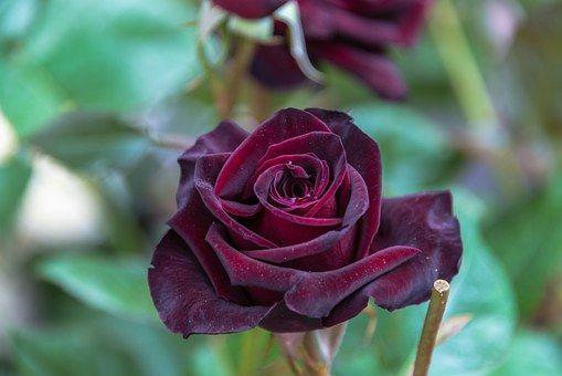Kwiat, Płatek, Charakter