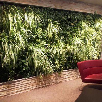 Pflanzenwand (Premium) Hospital Heiliger Geist