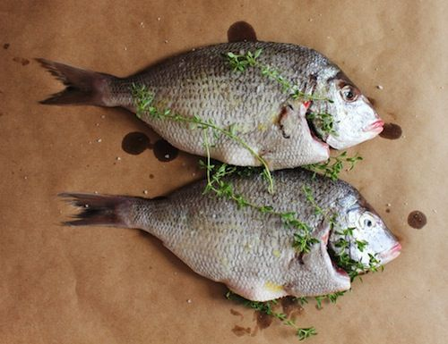 18 best great gift ideas gluten free images on pinterest for Best white fish to eat