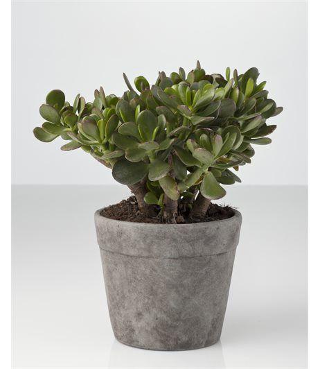 SKJULER I ANTIKLOOK Skjuler i antik brun. En flot skjuler til eksempelvis kaktus og sukkulenter. Diameter: 22,5 cm. Højde: 20 cm. 120,-  Skjuler i antik brun. En flot skjuler til eksempelvis kaktus og sukkulenter. Diameter: 17 cm. Højde: 15 cm. - 60,-  Skjuler i antik brun. En flot skjuler til eksempelvis kaktus og sukkulenter. Diameter: 15 cm. Højde: 13 cm.  - 38,-
